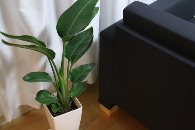 ふるさと納税で観葉植物