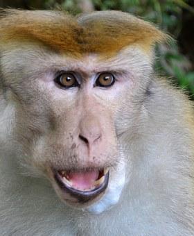 monkey-175682__340